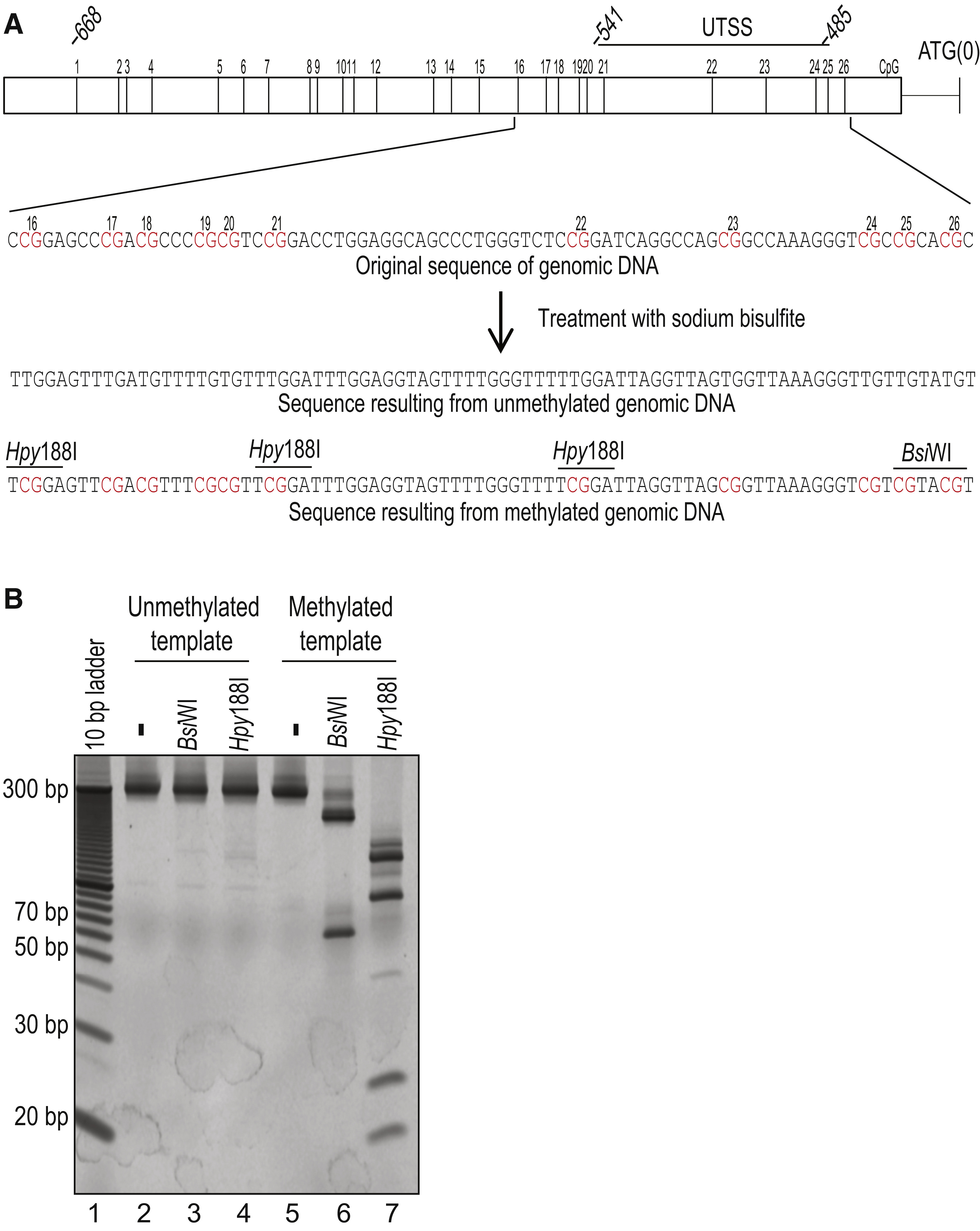Detection of Aberrant TERT Promoter Methylation by Combined ...